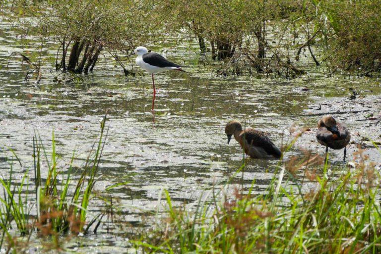 Zbiornik w Udawalawe ma duże znaczenie dla ptactwa wodnego