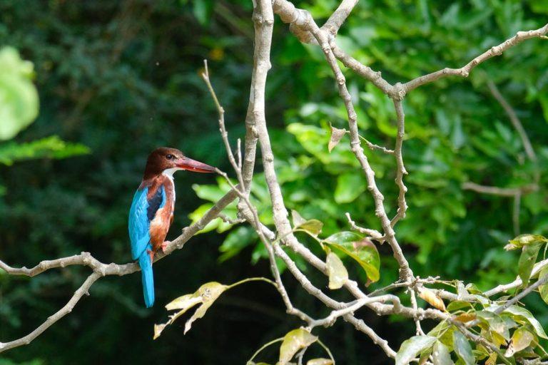 W Udawalawe jest 184 gatunków ptaków