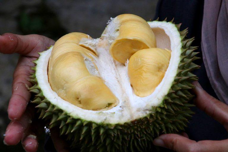 Durian ma w sobie tłuszcz, węglowodany, błonnik i cukry, a także wiele minerałów. Fot. Christopher Jayanata (Pixabay)